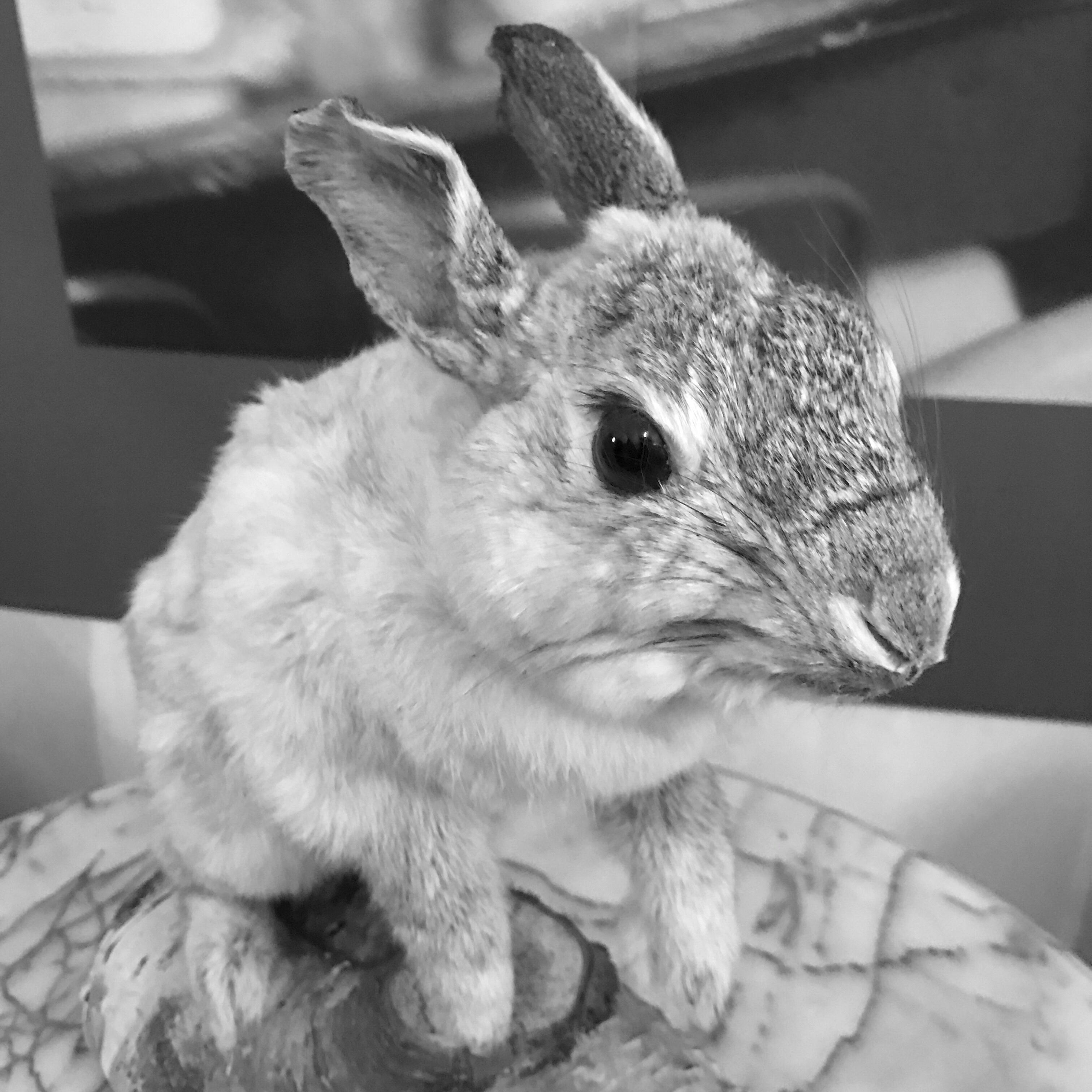 Stuffed rabbit Thumper