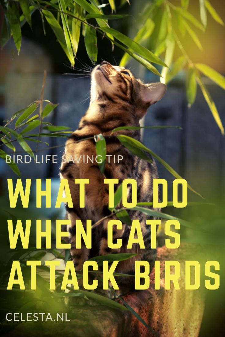 Cat attacks bird